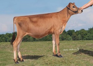 JFK54552 Edan Sweet Annie Lot 11
