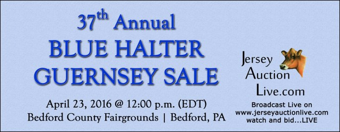 Blue Halter Sale