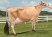ALL LYNNS IMPULS VALENTINE-ET, VG-84% Dam of All Lynns Critic Vamp-P-ET - Selling as Lot 4