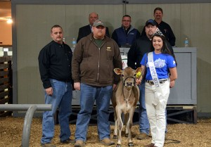SECOND HIGH SELLER Lot 10: Heartland Santiago Ainsley-ET brought $5,700 for her consignors, Heartland Jerseys, KS (represented by Justin Edwards, second from Left front). The buyer of this young genomic heifer was Leroy and Martha Sue Miller, Fredricksburg, OH (represented by Greg Lavan, far left front). Rachel Hinton is the Kentucky Jersey Queen on the halter, surrounded by sale staff of Jason Robinson, Herby Lutz, Chris Lundgren and Lynn Lee.