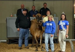 THIRD HIGH SELLER (TIE) Lot 58: Senn-Sational Iatola Abigail was sold to Jason Cast, NE for $5,100 and was consigned by Craig and Sharon Pagett, Backwoods Jerseys, KY (on the halter and behind). Kentucky Jersey Queen, Rachel Hinton and sale staff of Jason Robinson, Herby Lutz, Chris Lundgren and Lynn Lee are in the ring.