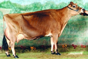 AVONLEA D JUDE KARMEL, E-94% Grandam of Donation Calf and one of the more prolific Jersey cows in the breed with over 80 sons and daughters. Of the over 61 offspring appraised 90% are Very Good or Excellent