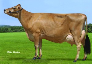 Mixed flush embryos from SHAN-MAR PROTON PENELOPE, E-90% available