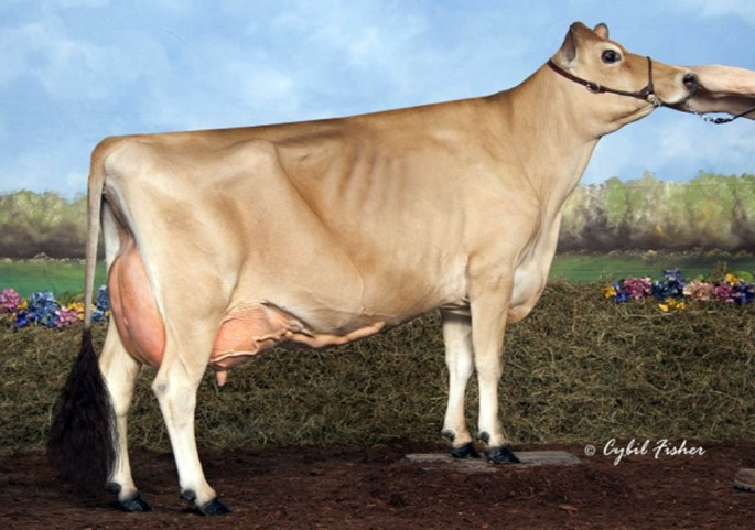 TIERNEYS NEPTUNE KELSEY, E-90% Dam of Lot 23, HI POITS BIG SHOW KATARINA who is due to calve on June 25, 2014 to Norse Star Knockout, 138JE4835