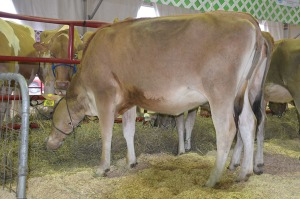 LOT 11 - TLJ VISIONARY BREE-ET, Born 9/14/2014 | GJPI +246 | GJUI +2.85 Click for video