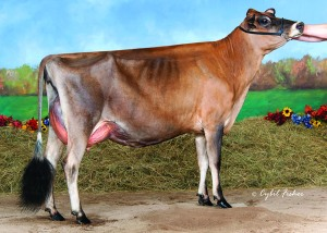 """LOT 22 - PFAFFS PRAIRIE TEQUILA GRACIOUS, VG-89% @2-11 __________________ First Choice Female sired by Rock Ella Impression-ET and out of """"Gracious."""" There are nine heifer pregnancies due in March, 2015"""