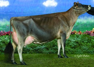 "RATLIFF SAMBO MARTINA, E-94% _________________ LOT 25 - 10 Units of Lester Sambo Semen. ""Martina"" is a daughter of ""Sambo"" and was the 2007 National Jersey Jug Futurity Winner"