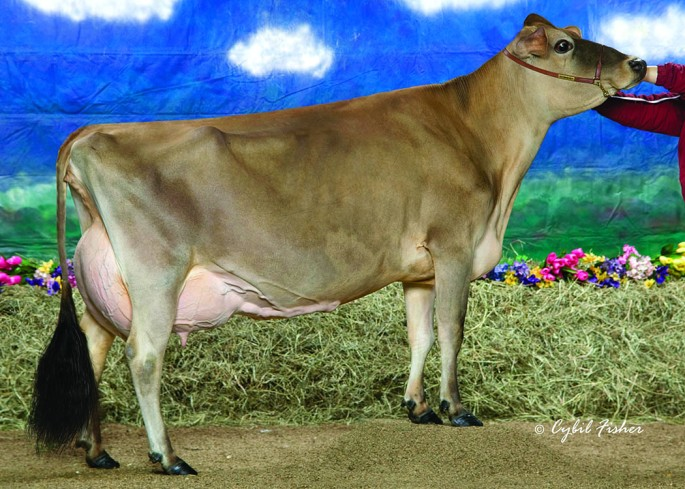 COWBELL COUNDILLOR PRALINE, E-94% is the grandam to the Lot 31 Choice of Flush in the Holiday Spectacular