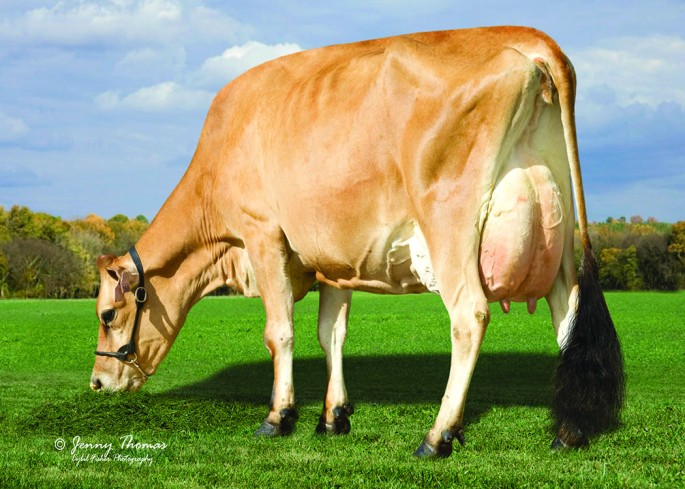 SUNSET CANYON NAVAR LV MAID 4-ET-91% Dam of Lot 70 embryos by BW Citation A-ET, 7JE1348