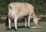 BARKLY KATE - Dam of Lot 50 embryos