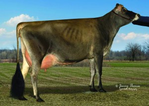 BILLINGS MINISTER MARTINA, VG-88% - Top selling lot (Lot 1) at the Northeast Jersey Classic & Breeders Sale