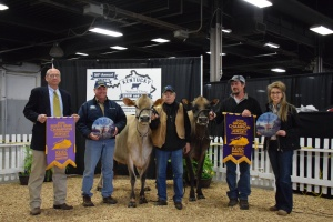 GRAND CHAMPION was Lot 53 - Ellies Action Response (right) and RESERVE GRAND CHAMPION was Lot 52 - Piedmont Headline Nicole (2nd Jr. 3 in class, left)
