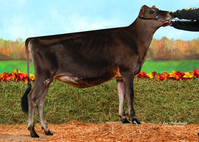 KELLOGG-BAY SILLY RESPONSE-ET Reserve Junior All American Intermediate Calf, 2015 Sold in the 2015 Northeast Classic & Breeders Sale Consigned by Joseph Allen, VT and purchased and shown by Katarina Emerich, NY