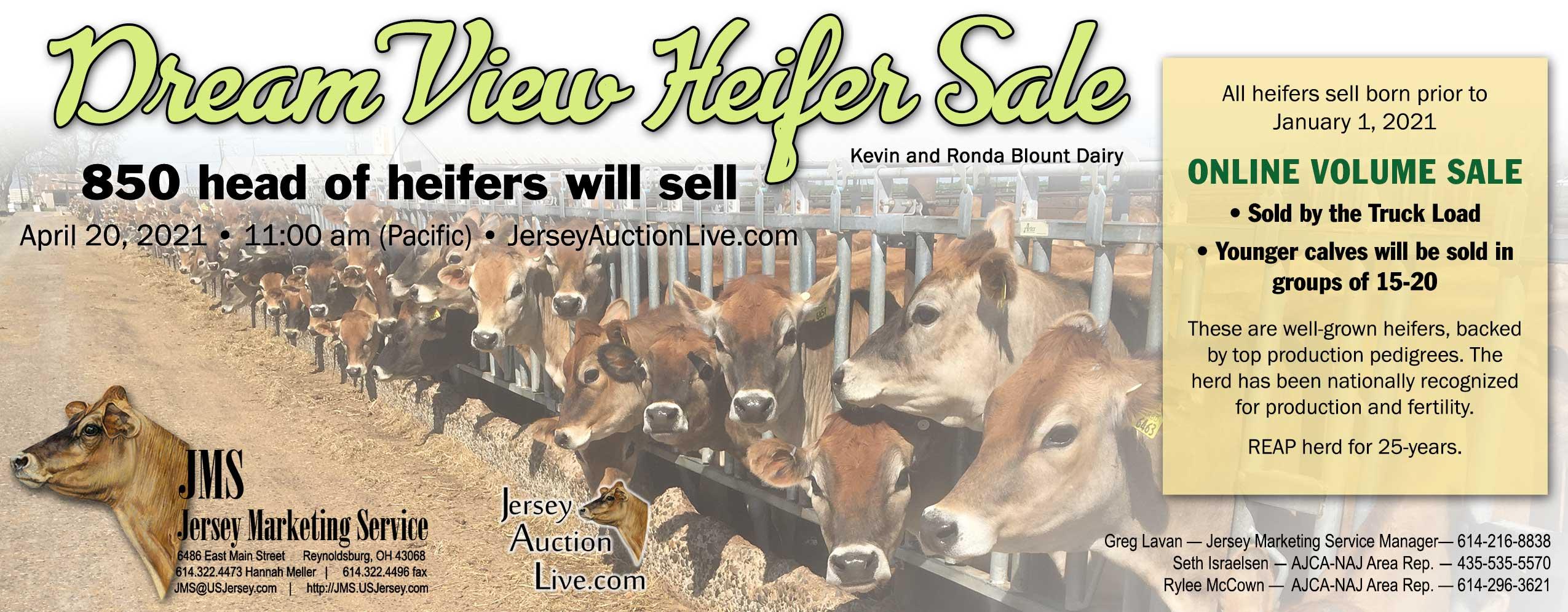 Blount-Heifer-Sale